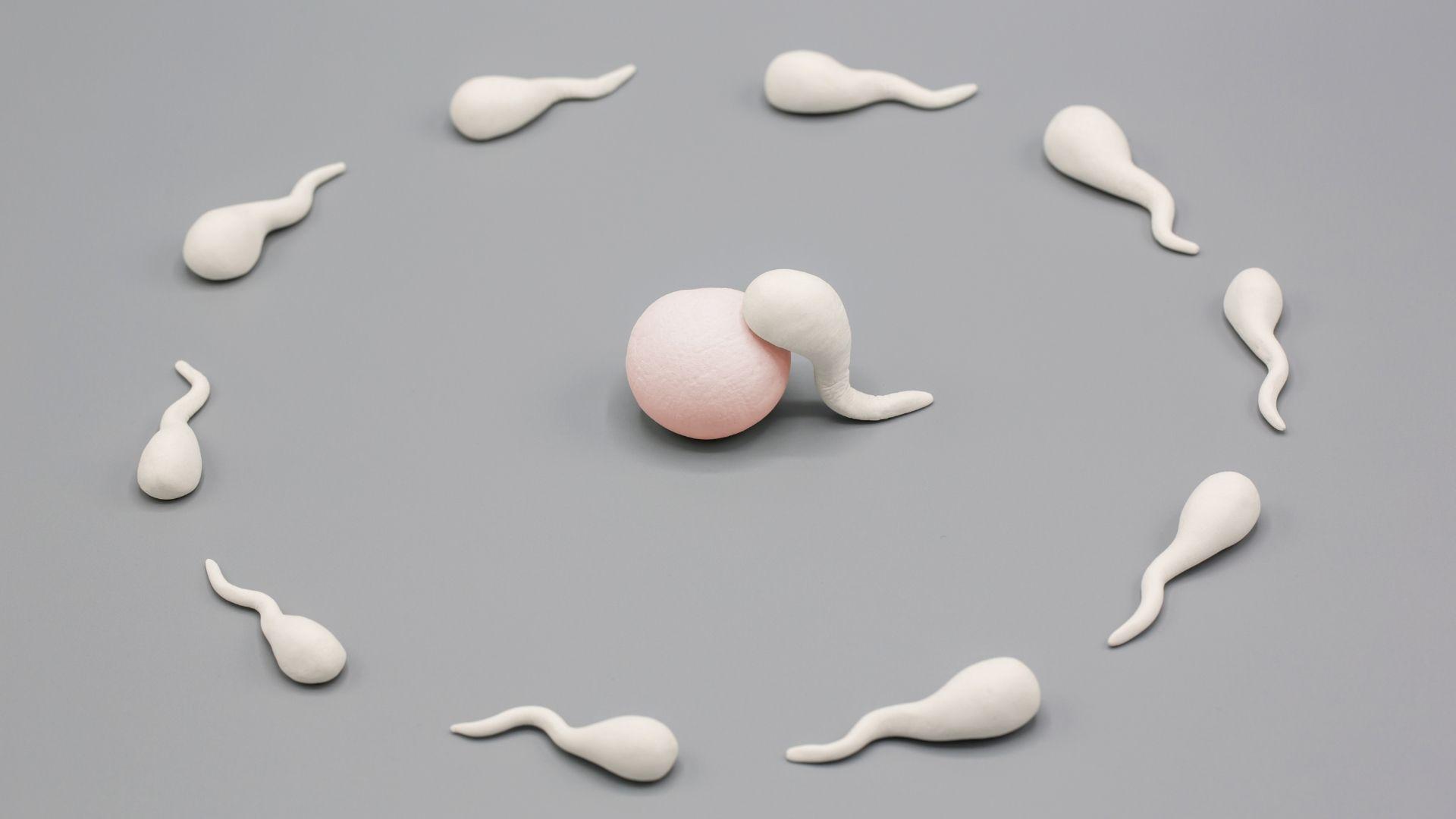 Óvulo y espermatozoides